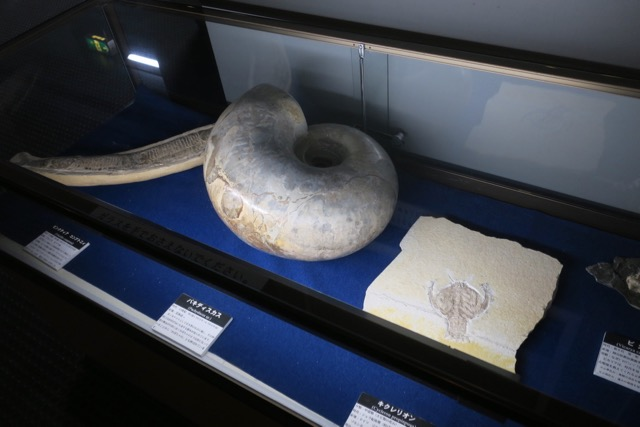 赤穂市立海洋科学館化石展示