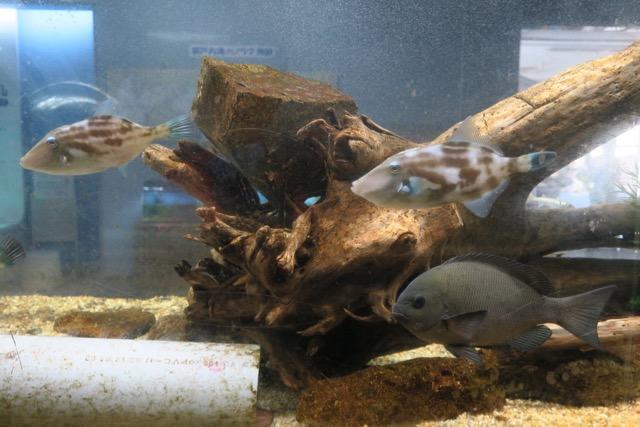 赤穂市立海洋科学館水族展示