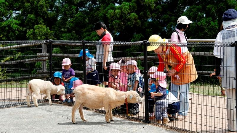 但馬牧場公園の小動物