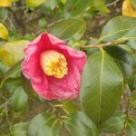 Thumbnail of post image 163